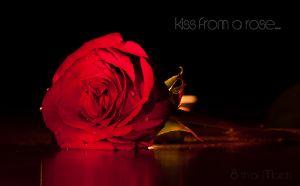 Роза - 8-ми март